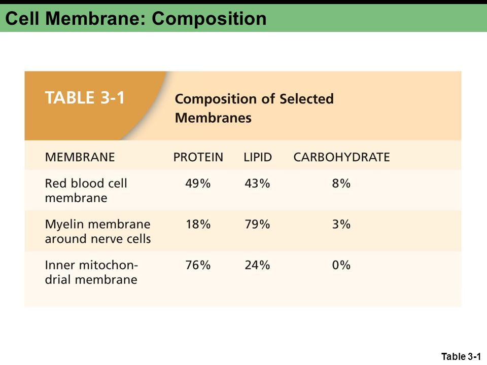 Cell Membrane: Composition