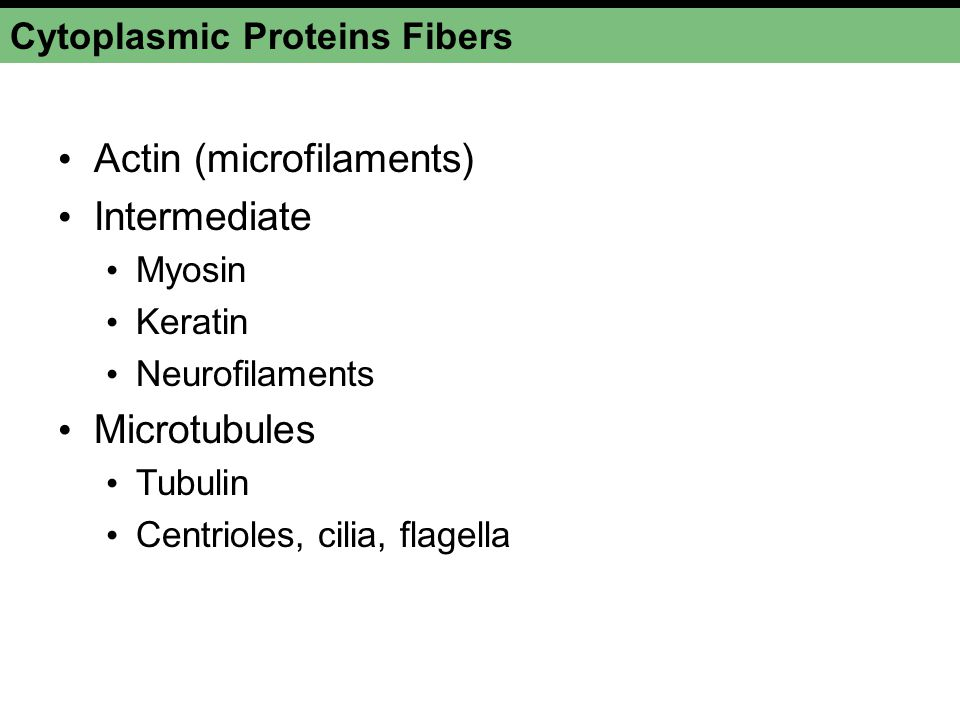 Cytoplasmic Proteins Fibers