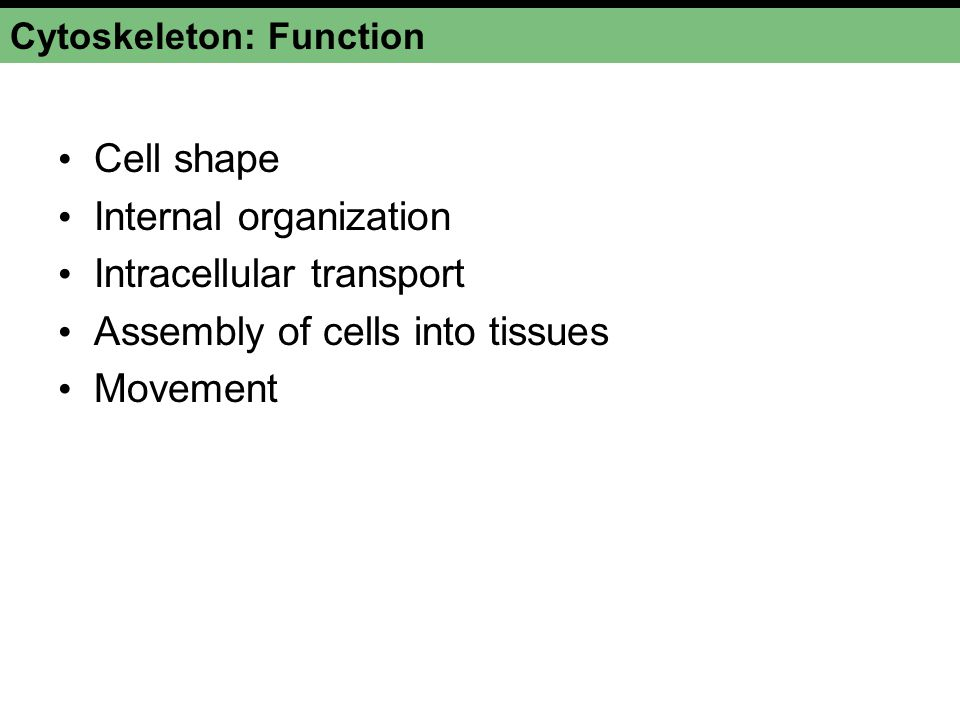 Cytoskeleton: Function