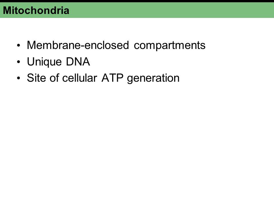 Membrane-enclosed compartments Unique DNA