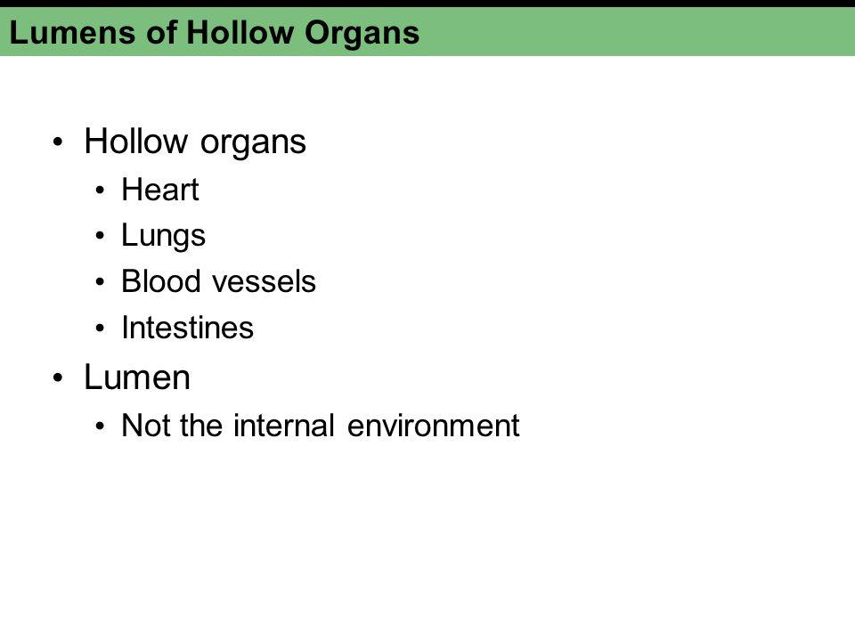 Lumens of Hollow Organs