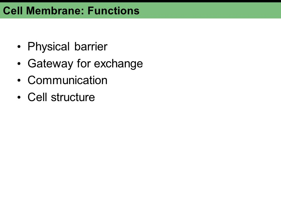Cell Membrane: Functions