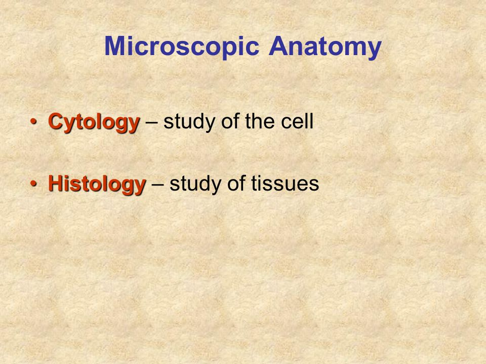 Microscopic Anatomy Cytology – study of the cell