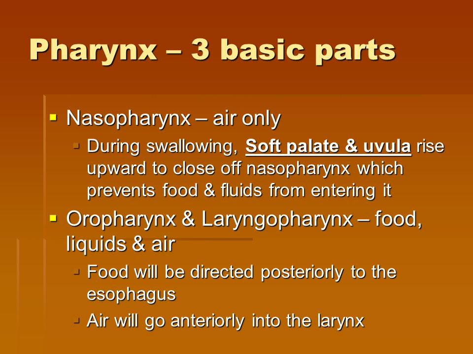 Pharynx – 3 basic parts Nasopharynx – air only