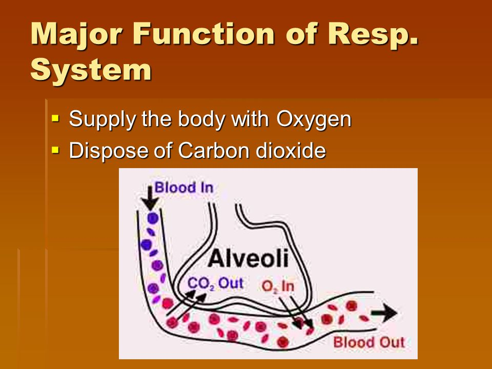 Major Function of Resp. System