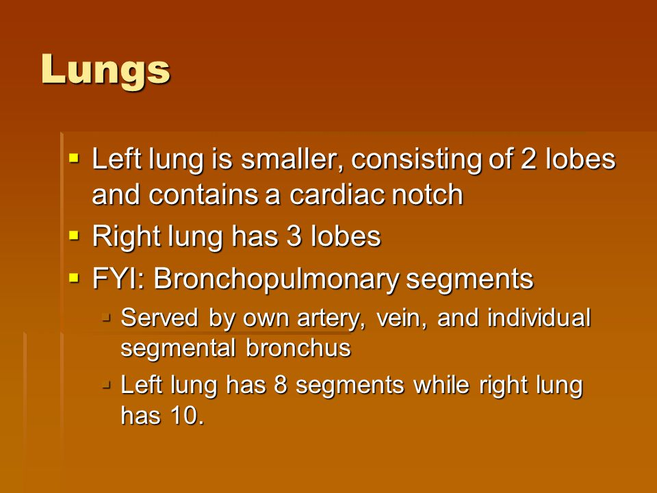 Lungs Left lung is smaller, consisting of 2 lobes and contains a cardiac notch. Right lung has 3 lobes.