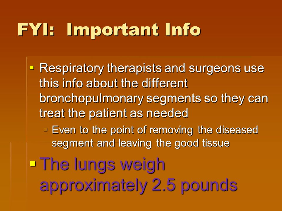 The lungs weigh approximately 2.5 pounds