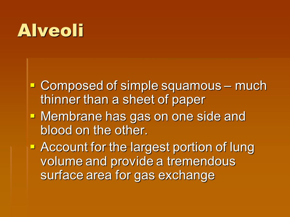 Alveoli Composed of simple squamous – much thinner than a sheet of paper. Membrane has gas on one side and blood on the other.