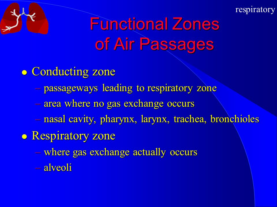 Functional Zones of Air Passages