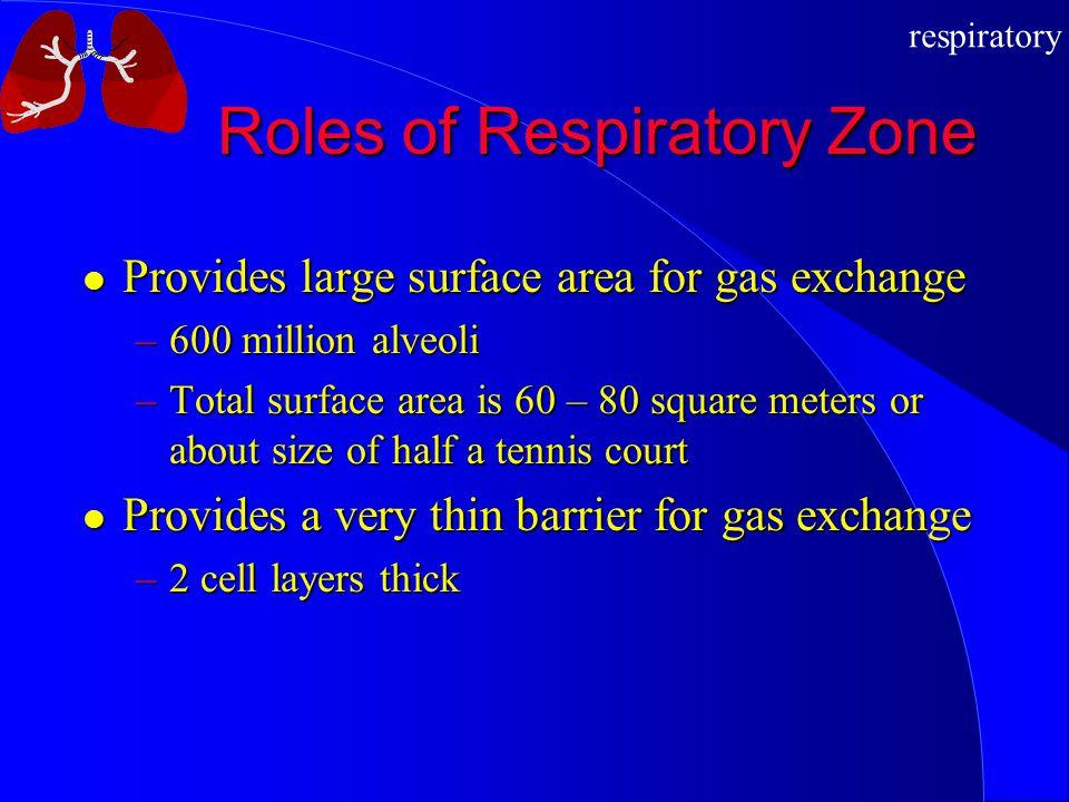 Roles of Respiratory Zone
