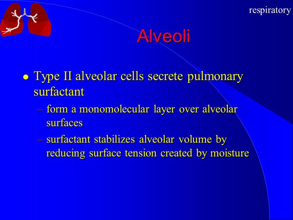 Alveoli Type II alveolar cells secrete pulmonary surfactant