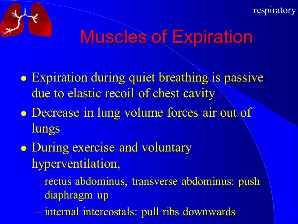 Muscles of Expiration Expiration during quiet breathing is passive due to elastic recoil of chest cavity.