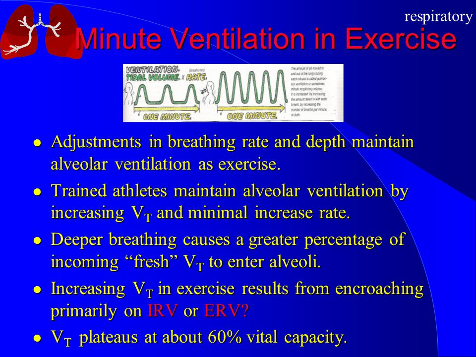 Minute Ventilation in Exercise
