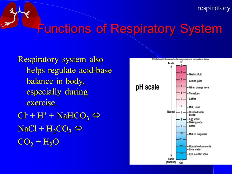 Functions of Respiratory System