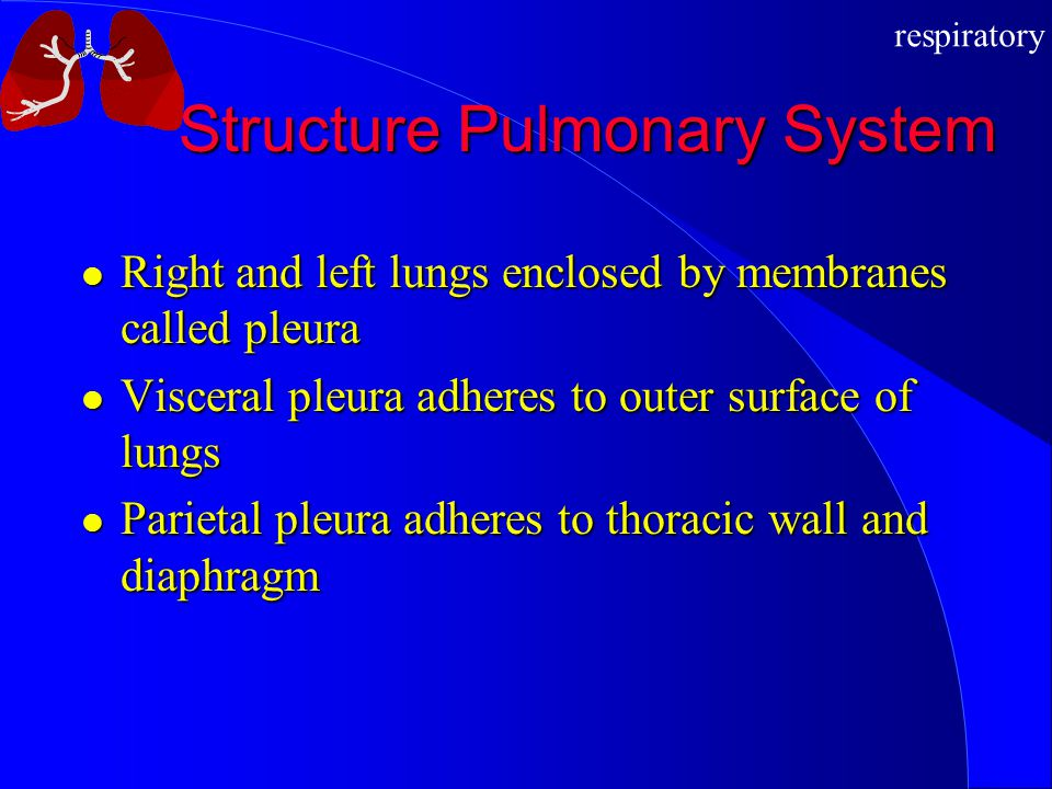 Structure Pulmonary System