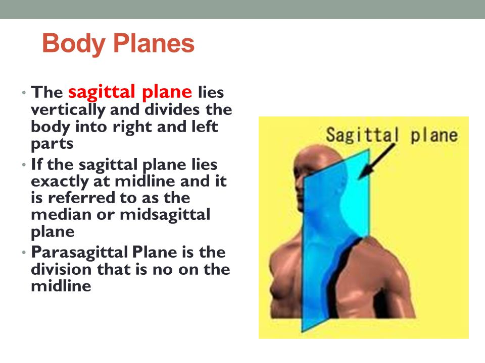 Body Planes The sagittal plane lies vertically and divides the body into right and left parts.