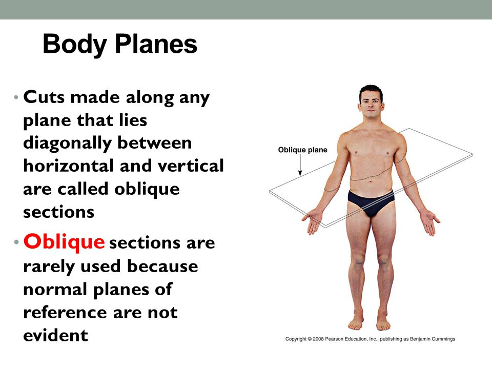 Body Planes Cuts made along any plane that lies diagonally between horizontal and vertical are called oblique sections.