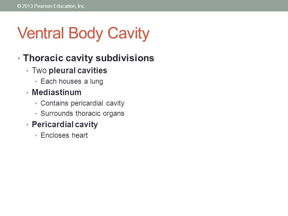 Ventral Body Cavity Thoracic cavity subdivisions Two pleural cavities