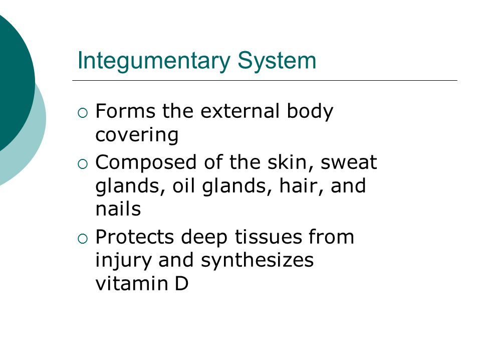 Integumentary System Forms the external body covering