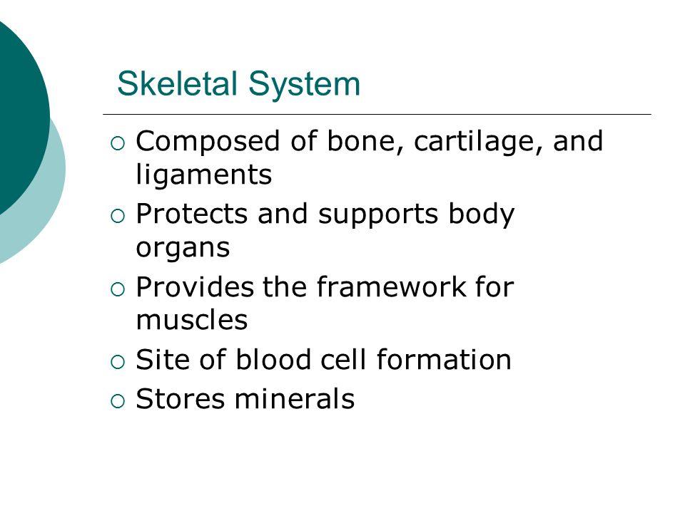 Skeletal System Composed of bone, cartilage, and ligaments