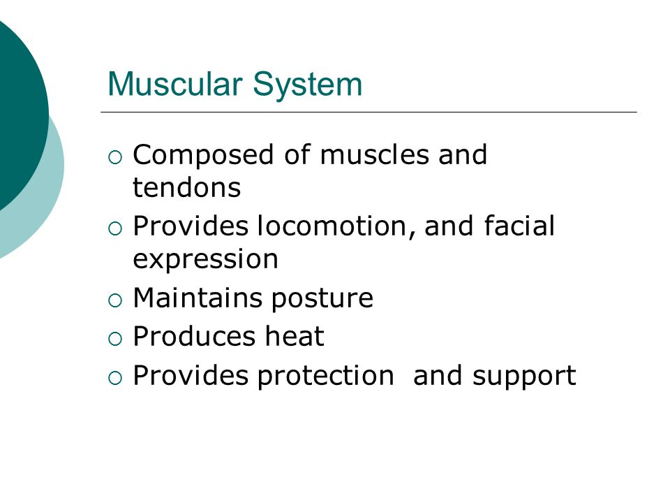 Muscular System Composed of muscles and tendons