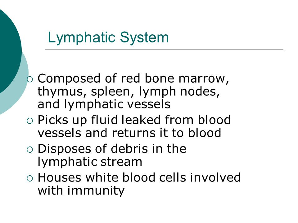 Lymphatic System Composed of red bone marrow, thymus, spleen, lymph nodes, and lymphatic vessels.