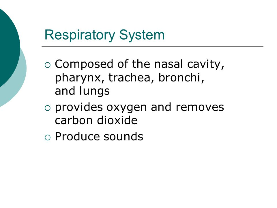 Respiratory System Composed of the nasal cavity, pharynx, trachea, bronchi, and lungs. provides oxygen and removes carbon dioxide.