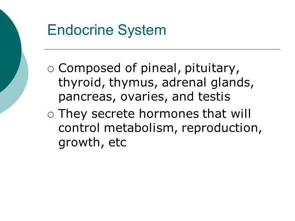 Endocrine System Composed of pineal, pituitary, thyroid, thymus, adrenal glands, pancreas, ovaries, and testis.