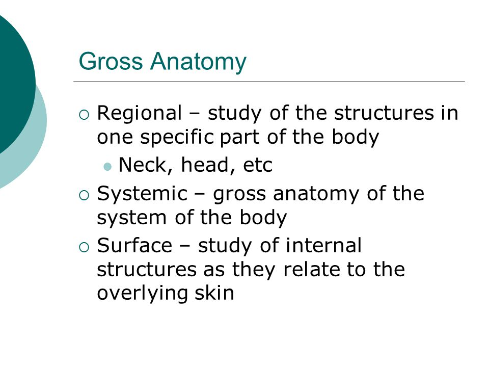 Gross Anatomy Regional – study of the structures in one specific part of the body. Neck, head, etc.