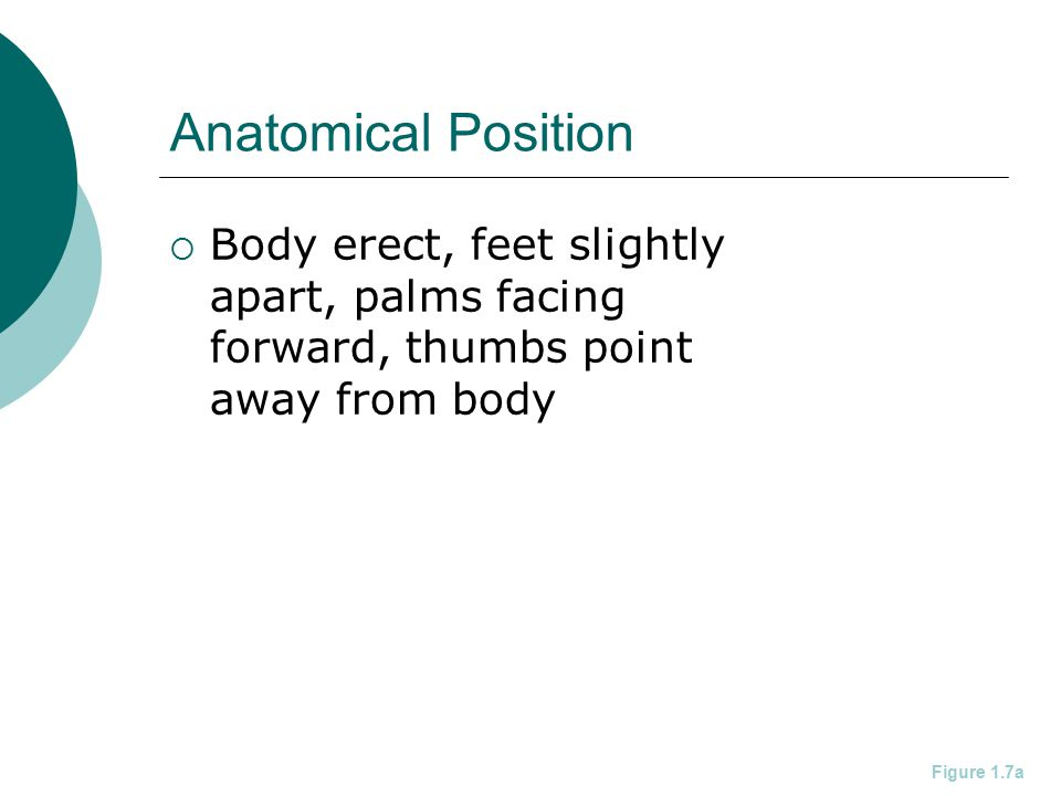 Anatomical Position Body erect, feet slightly apart, palms facing forward, thumbs point away from body.