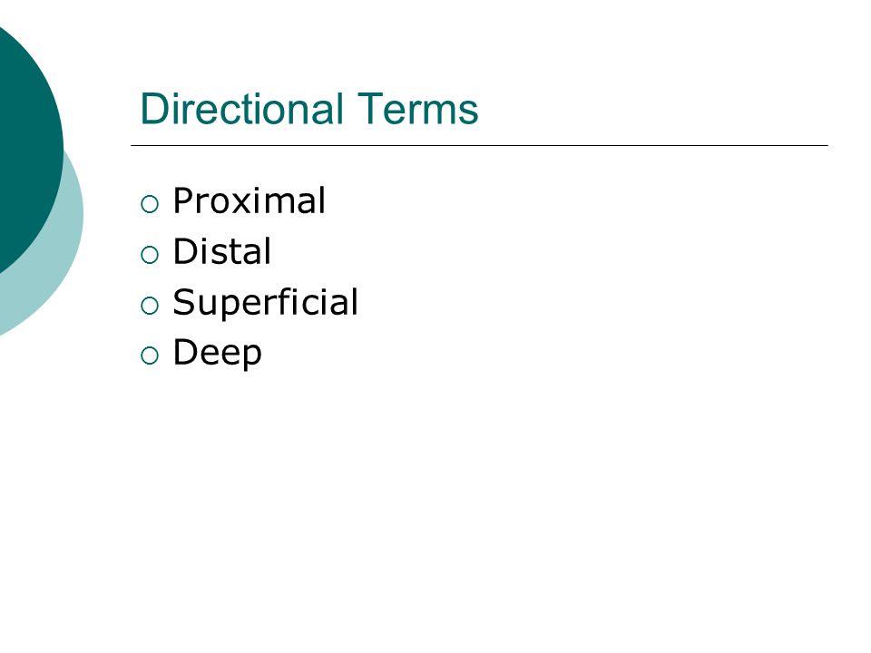 Directional Terms Proximal Distal Superficial Deep