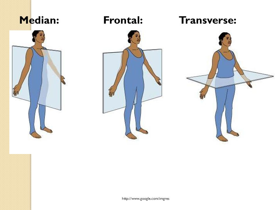 Median: Frontal: Transverse: