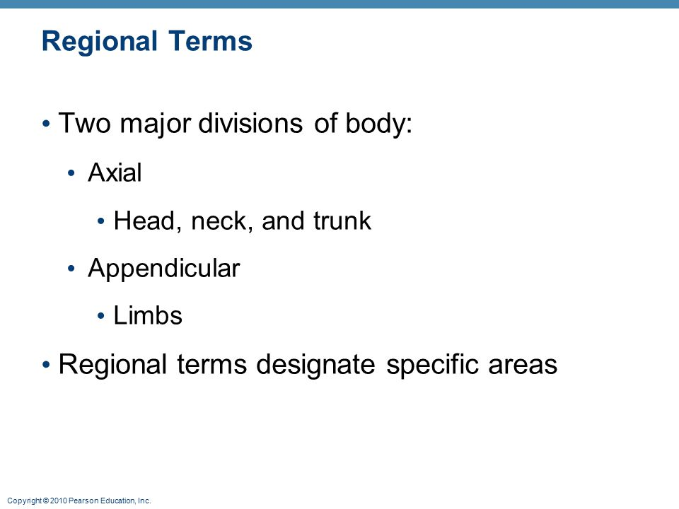 Two major divisions of body: