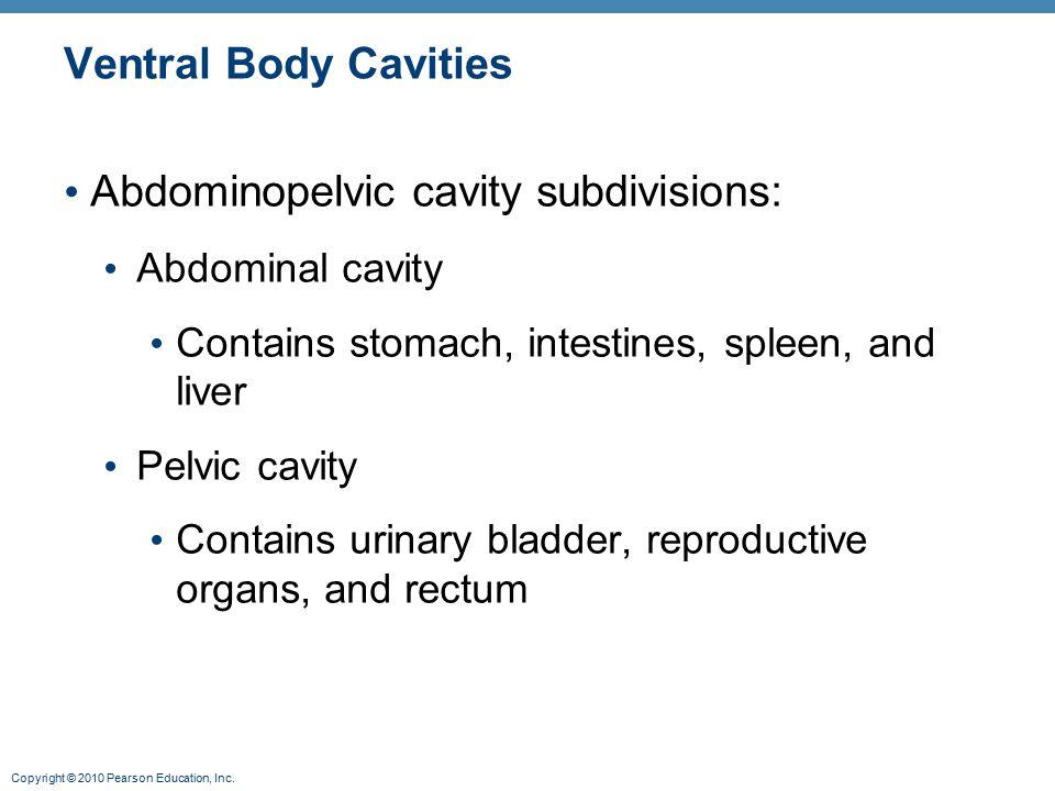 Abdominopelvic cavity subdivisions: