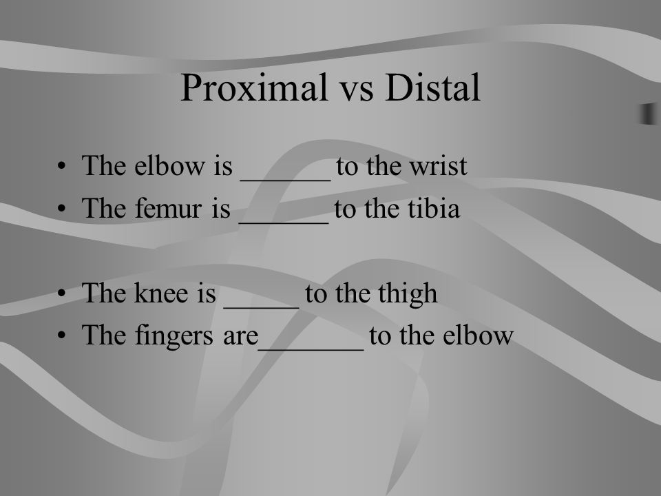 Proximal vs Distal The elbow is ______ to the wrist