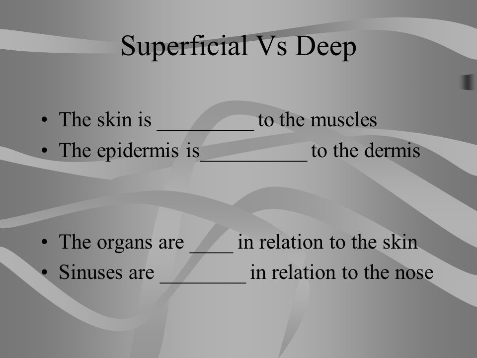 Superficial Vs Deep The skin is _________ to the muscles