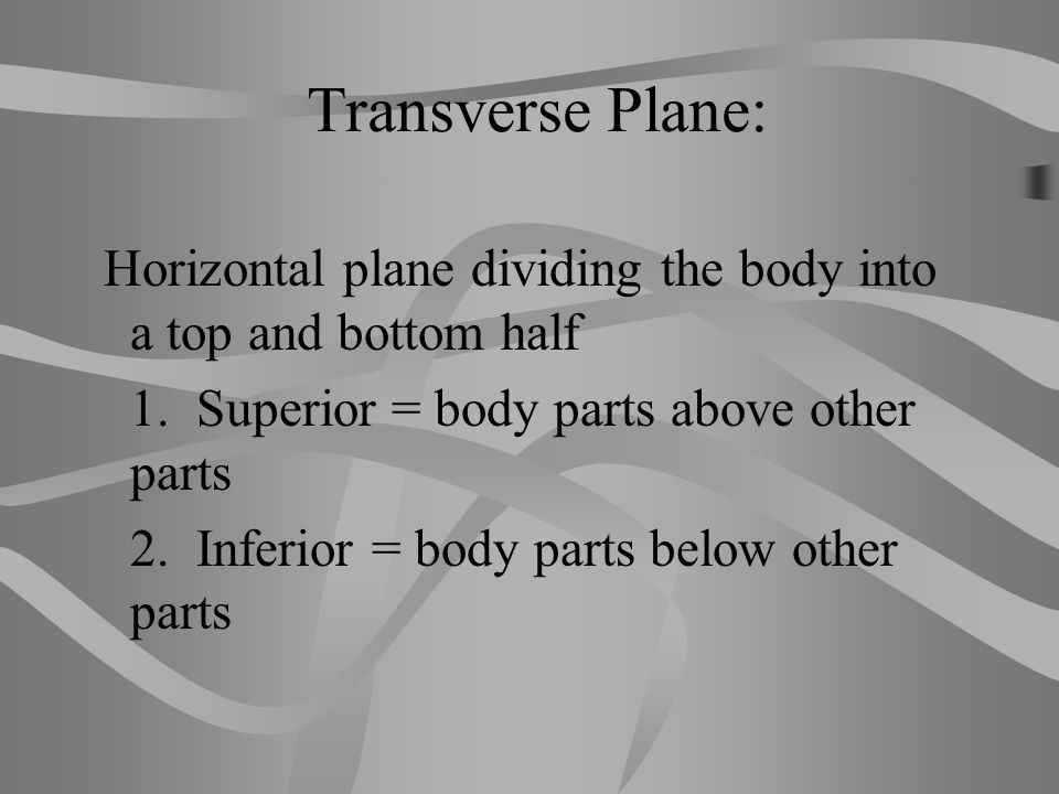 Transverse Plane: Horizontal plane dividing the body into a top and bottom half. 1. Superior = body parts above other parts.