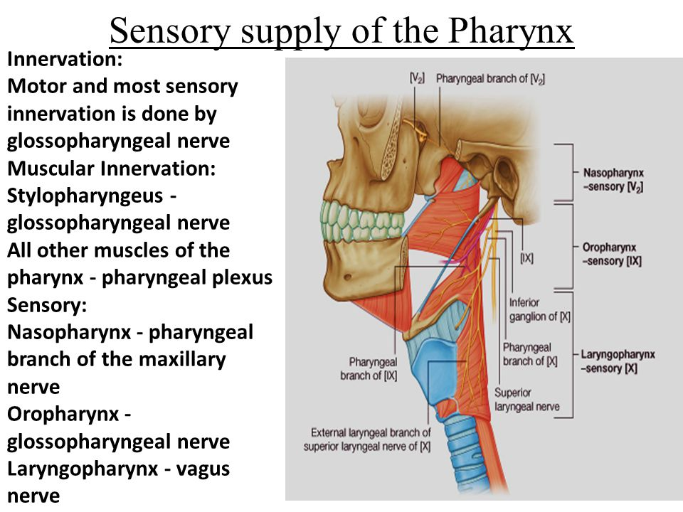 Sensory supply of the Pharynx