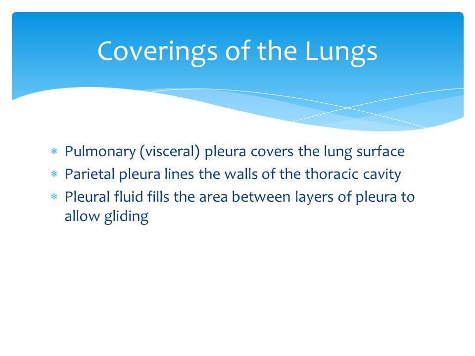 Coverings of the Lungs Pulmonary (visceral) pleura covers the lung surface. Parietal pleura lines the walls of the thoracic cavity.