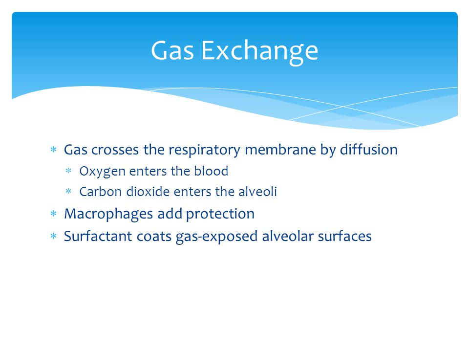 Gas Exchange Gas crosses the respiratory membrane by diffusion