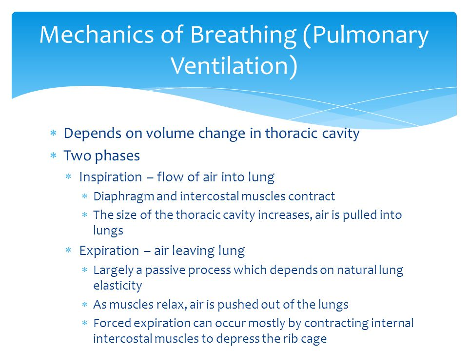 Mechanics of Breathing (Pulmonary Ventilation)