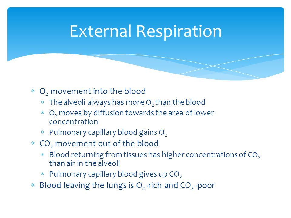 External Respiration O2 movement into the blood