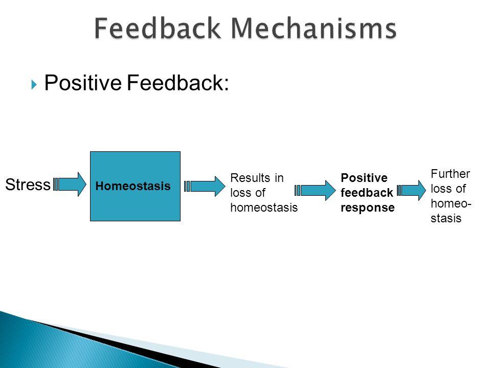 Feedback Mechanisms Positive Feedback: Stress