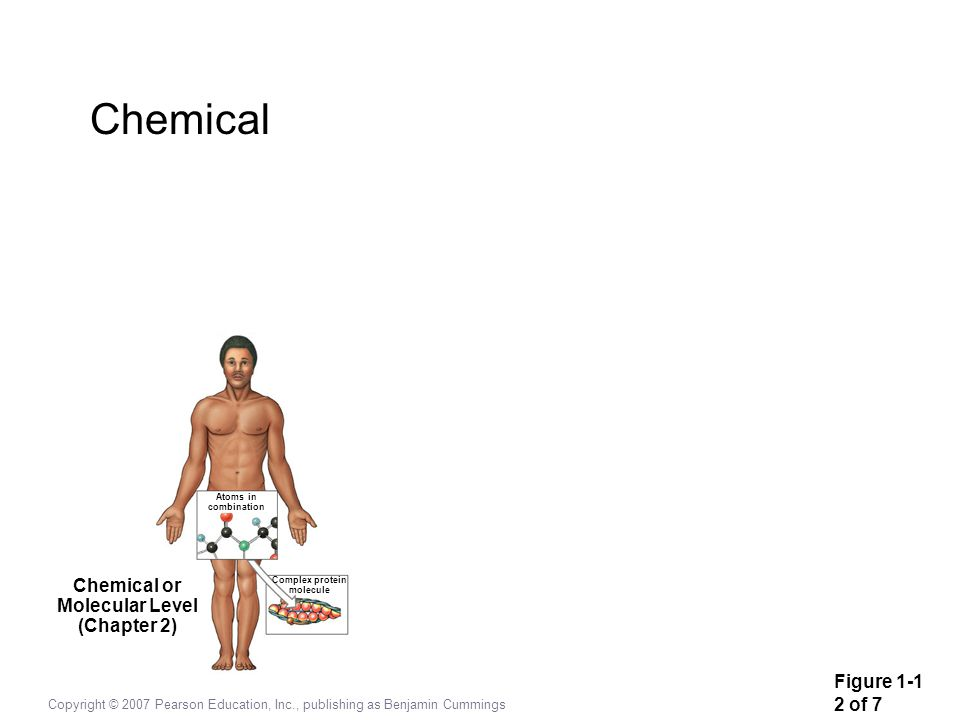 Chemical Chemical or Molecular Level (Chapter 2) Figure 1-1 2 of 7