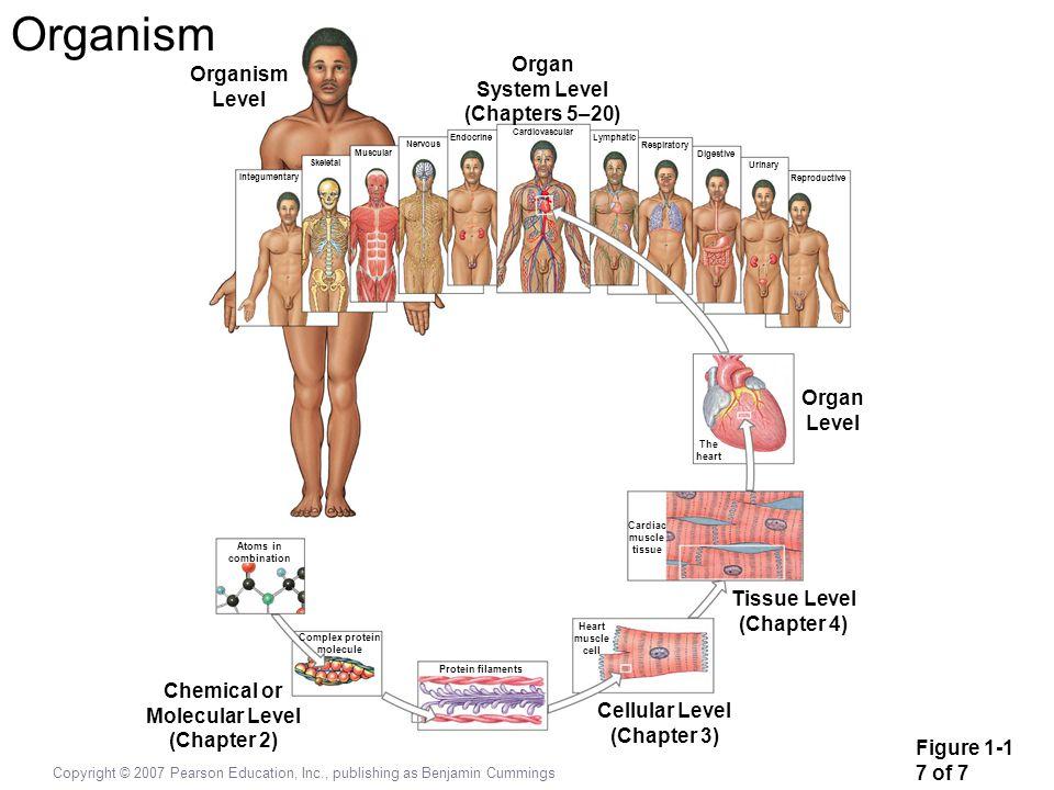 Organism Organ Organism System Level Level (Chapters 5–20) Organ Level