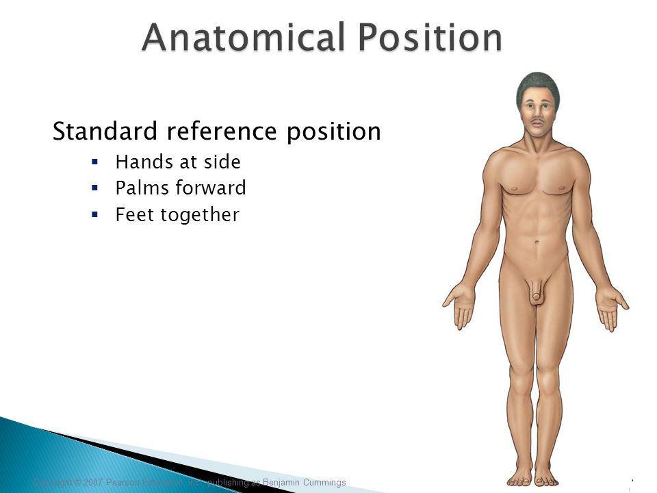 Anatomical Position Standard reference position Hands at side