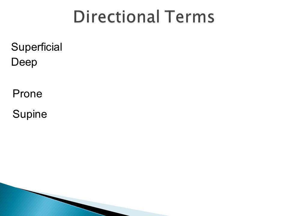 Directional Terms Superficial Deep Prone Supine