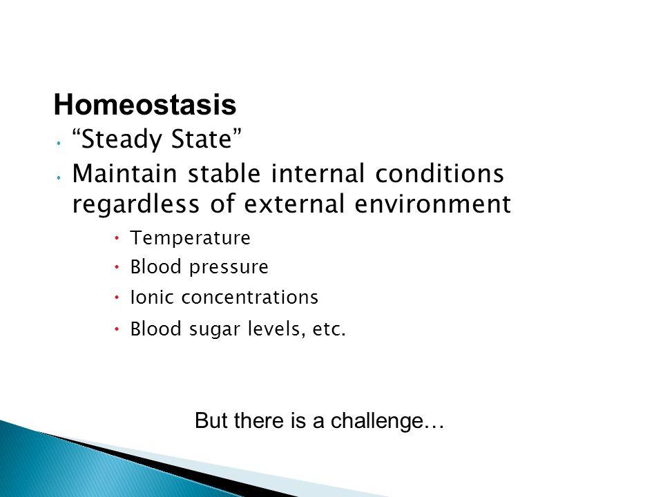Homeostasis Steady State