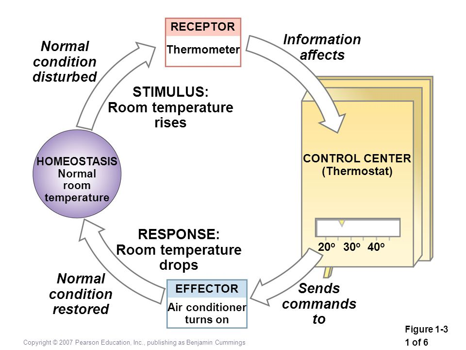 Information Normal affects condition disturbed STIMULUS: