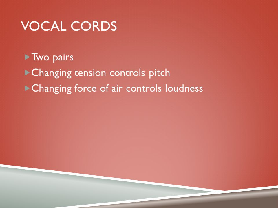 Vocal cords Two pairs Changing tension controls pitch